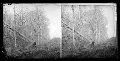 George Bradford Brainerd (American, 1845-1887). Up the Trout Brook, New Lots, Brooklyn, November 26, 1874. Collodion silver glass wet plate negative Brooklyn Museum, Brooklyn Museum/Brooklyn Public Library, Brooklyn Collection, 1996.164.2-838