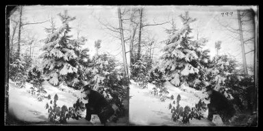 George Bradford Brainerd (American, 1845-1887). Snow Scene, Prospect Park, Brooklyn, ca. 1872-1887. Collodion silver glass wet plate negative Brooklyn Museum, Brooklyn Museum/Brooklyn Public Library, Brooklyn Collection, 1996.164.2-999