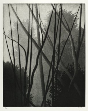 Robert Kipniss (American, born 1931). Trees and Trees, 1996. Mezzotint on heavy laid Arches white paper, Sheet: 11 3/4 x 9 3/8 in. (29.8 x 23.8 cm). Brooklyn Museum, Gift of the artist, 1997.82. © Robert Kipniss