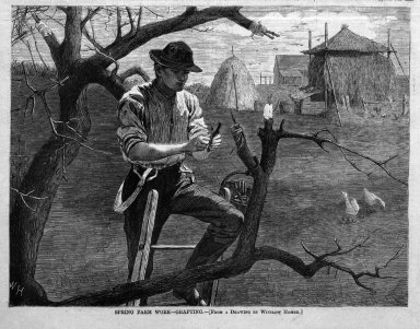 Winslow Homer (American, 1836-1910). Spring Farm Work--Grafting, 1870. Wood engraving, Image: 7 x 9 1/8 in. (17.8 x 23.2 cm). Brooklyn Museum, Gift of Harvey Isbitts, 1998.105.148
