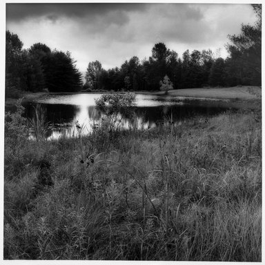 Sally Gall (American, born 1956). Pond, 1990. Toned gelatin silver photograph, image: 20 x 16 in. (50.8 x 40.6 cm). Brooklyn Museum, Gift of Gerald Lotenberg, 1999.150.3. © Sally Gall