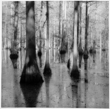 Sally Gall (American, born 1956). Bayou, 1992. Toned gelatin silver photograph, Sheet: 20 x 16 in.  (50.8 x 40.6 cm);. Brooklyn Museum, Gift of Gerald Lotenberg, 1999.150.4. © Sally Gall