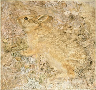 Gerald H. Thayer (American, 1883-1935). The Cotton-Tail Rabbit among Dry Grasses and Leaves, 1904. Opaque watercolor over graphite on cream, smooth textured paper-surfaced pulpboard, 18 3/4 x 19 1/2 in. (47.6 x 49.5 cm). Brooklyn Museum, Gift of Mrs. Harry Payne Whitney, 20.645