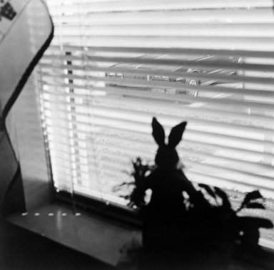 Gerard Vezzuso (American, born 1943). View from Window with Rabbit, Bayville, NJ, 2000. Gelatin silver photograph, sheet: 20 7/8 x 24 7/8 in.  (53.0 x 62.9  cm). Brooklyn Museum, Gift of the artist, 2000.122.6. © Gerard Vezzuso