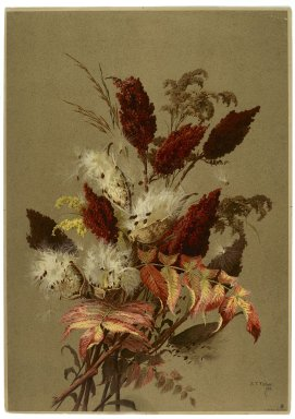 Ellen Thayer Fisher (American, 1847-1911). Sumac and Milk-weed, 1885. Lithograph, 20 9/16 x 14 1/2 in.  (52.2 x 36.8 cm). Brooklyn Museum, Gift of Dr. Clark S. Marlor, 2001.75
