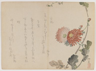 Shûtei Tanaka (Japanese, 1810-1858). Chrysanthemums, ca. 1855. Woodblock print; horizontal Chûban yoko-e format, 7 1/8 x 9 7/8 in. (18.1 x 25.1 cm). Brooklyn Museum, Gift of Dr. Eleanor Z. Wallace in memory of her husband, Dr. Stanley L. Wallace, 2002.121.32