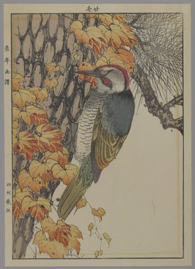 [Untitled] (Woodpecker), 1892. Print, Other (Sight): 12 3/16 x 8 7/16 in. (31 x 21.4 cm). Brooklyn Museum, Gift of the Estate of Dr. Eleanor Z. Wallace, 2007.32.130