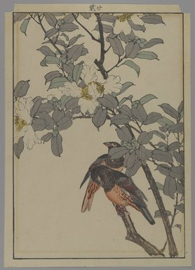 [Untitled] (Two Birds with White Flowers), 1892. Print, Other (Sight): 12 3/16 x 8 7/16 in. (31 x 21.4 cm). Brooklyn Museum, Gift of the Estate of Dr. Eleanor Z. Wallace, 2007.32.131