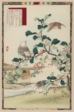 Kono Bairei (Japanese, 1844-1895). White Headed Birds, 1883. Woodblock color print, Other: 14 1/2 x 9 1/2 in. (36.8 x 24.1 cm). Brooklyn Museum, Gift of the Estate of Dr. Eleanor Z. Wallace, 2007.32.29