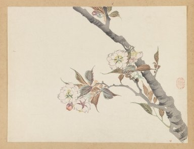 Mochizuki Gyokusen (Japanese, 1794-1852). Branch of Blossoming Cherry. Woodblock color print, 9 1/2 x 12 7/16 in. (24.1 x 31.6 cm). Brooklyn Museum, Gift of the Estate of Dr. Eleanor Z. Wallace, 2007.32.32