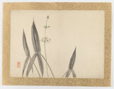 Nishiyama Hoen (Japanese, 1804-1867). [Untitled] (Flower Subject), 1855. Ink and light color on paper, 20 5/8 x 14 7/8 in. (52.4 x 37.8 cm). Brooklyn Museum, Gift of the Estate of Dr. Eleanor Z. Wallace, 2007.32.42
