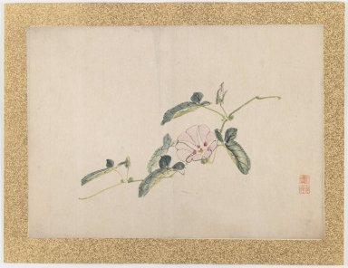 Nishiyama Hoen (Japanese, 1804-1867). [Untitled] (Light Pink Morning Glory Flower), 1855. Ink and light color on paper, 10 3/4 x 15 in. (27.3 x 38.1 cm). Brooklyn Museum, Gift of the Estate of Dr. Eleanor Z. Wallace, 2007.32.50
