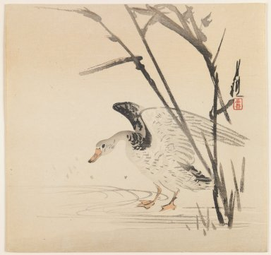 Ogata Gekko (Japanese, 1859-1920). Goose Behind Grasses, ca. 1890-1910. Woodblock color print, 9 1/2 x 9 15/16 in. (24.1 x 25.2 cm). Brooklyn Museum, Gift of the Estate of Dr. Eleanor Z. Wallace, 2007.32.64