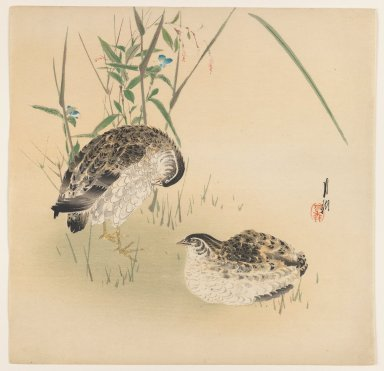 Ogata Gekko (Japanese, 1859-1920). Two Quail, ca. 1890-1910. Woodblock color print, 9 1/2 x 9 3/4 in. (24.1 x 24.8 cm). Brooklyn Museum, Gift of the Estate of Dr. Eleanor Z. Wallace, 2007.32.65