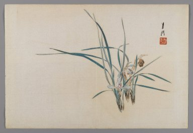 Ogata Gekko (Japanese, 1859-1920). Orchids [Album page from a Bird and Flower (Kacho) Book], ca. 1890-1900. Woodblock color print with silver pigment, 9 3/8 x 13 3/4 in. (23.8 x 34.9 cm). Brooklyn Museum, Gift of the Estate of Dr. Eleanor Z. Wallace, 2007.32.80