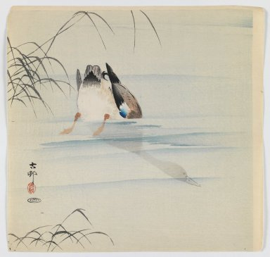 Ohara Koson (Shoson) (Japanese, 1877-1945). Diving Mallard, ca. 1910. Woodblock color print, 9 1/2 x 9 7/8 in. (24.1 x 25.1 cm). Brooklyn Museum, Gift of the Estate of Dr. Eleanor Z. Wallace, 2007.32.84
