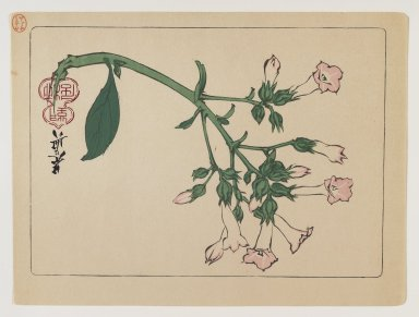 Shibata Zeshin (Japanese, 1807-1891). Flowering Plant, ca. 1880. Woodblock color print, 6 7/16 x 9 7/16 in. (16.4 x 24 cm). Brooklyn Museum, Gift of the Estate of Dr. Eleanor Z. Wallace, 2007.32.95