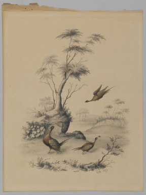 James Ryder van Brunt (American, 1820-1916). Three Pheasants, 1873. Graphite and watercolor on paper, Sheet: 10 x 7 9/16 in. (25.4 x 19.2 cm). Brooklyn Museum, Gift of Mrs. H. Derderian, 2008.61.2