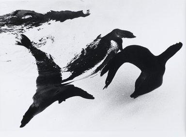 Nathan Lerner (American, 1914-1997). Seals, n.d. Gelatin silver photograph, Sheet: 11 x 14 in. (27.9 x 35.6 cm). Brooklyn Museum, Gift of Kiyoko Lerner, 2011.25.27. ©Nathan Lerner