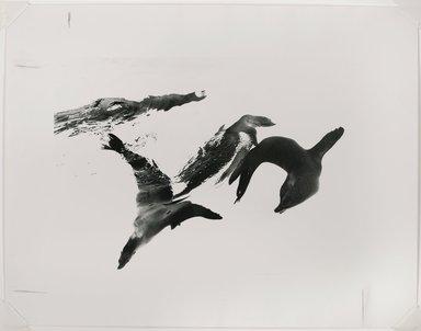 Nathan Lerner (American, 1914-1997). Seals, Chicago, 1970, printed later. Gelatin silver photograph, Mat: 18 x 22 in. (45.7 x 55.9 cm). Brooklyn Museum, Gift of Kiyoko Lerner, 2011.25.63. ©Nathan Lerner