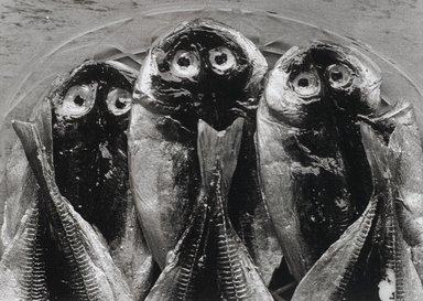 Nathan Lerner (American, 1914-1997). Three Fish, Yugawara, Japan 1974, Printed 1983. Selenium-toned print, Sheet: 16 x 20 in. (40.6 x 50.8 cm). Brooklyn Museum, Gift of Kiyoko Lerner, 2011.25.78. ©Nathan Lerner