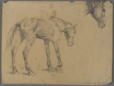 Philip H. Wolfrom (American, 1870-1904). Horse and Horse's Head, ca. 1915-1920. Graphite on paper, Sheet: 10 1/16 x 13 1/4 in. (25.6 x 33.7 cm). Brooklyn Museum, Gift of Anna Wolfrom Dove, 27.810