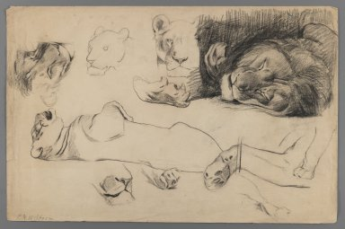 Philip H. Wolfrom (American, 1870-1904). Studies of Lions and Tigers, n.d. Charcoal on paper, Sheet: 12 13/16 x 19 11/16 in. (32.5 x 50 cm). Brooklyn Museum, Gift of Anna Wolfrom Dove, 27.812