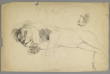 Philip H. Wolfrom (American, 1870-1904). Sleeping Lion, n.d. Graphite on paper, Sheet: 12 13/16 x 19 3/4 in. (32.5 x 50.2 cm). Brooklyn Museum, Gift of Anna Wolfrom Dove, 27.814