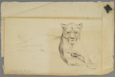 Philip H. Wolfrom (American, 1870-1904). Lioness, n.d. Graphite on paper, Sheet: 12 x 18 3/4 in. (30.5 x 47.6 cm). Brooklyn Museum, Gift of Anna Wolfrom Dove, 27.817