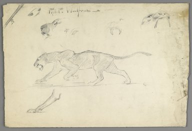 Philip H. Wolfrom (American, 1870-1904). Studies of a Striding Lion, n.d. Graphite on paper, Sheet: 9 13/16 x 14 3/8 in. (24.9 x 36.5 cm). Brooklyn Museum, Gift of Anna Wolfrom Dove, 27.818