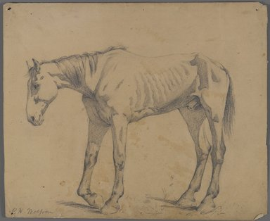 Philip H. Wolfrom (American, 1870-1904). Horse, n.d. Graphite on paper, Sheet: 10 1/8 x 12 1/4 in. (25.7 x 31.1 cm). Brooklyn Museum, Gift of Anna Wolfrom Dove, 27.819