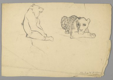 Philip H. Wolfrom (American, 1870-1904). Cheetah and Bear, n.d. Graphite on paper, Sheet: 9 3/4 x 14 3/8 in. (24.8 x 36.5 cm). Brooklyn Museum, Gift of Anna Wolfrom Dove, 27.820