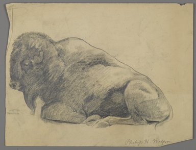 Philip H. Wolfrom (American, 1870-1904). Bison, n.d. Graphite on paper, Sheet: 9 7/8 x 12 7/8 in. (25.1 x 32.7 cm). Brooklyn Museum, Gift of Anna Wolfrom Dove, 27.821