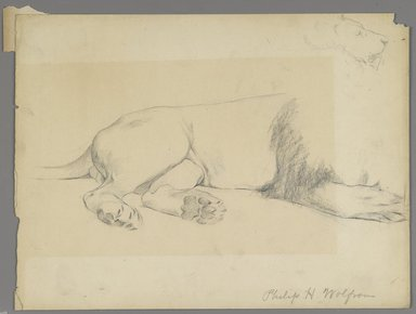 Philip H. Wolfrom (American, 1870-1904). Studies of Lion, n.d. Graphite on paper, Sheet: 8 15/16 x 11 7/8 in. (22.7 x 30.2 cm). Brooklyn Museum, Gift of Anna Wolfrom Dove, 27.825