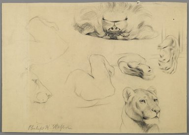 Philip H. Wolfrom (American, 1870-1904). Studies of Lion, n.d. Graphite on paper, Sheet: 9 1/16 x 12 7/8 in. (23 x 32.7 cm). Brooklyn Museum, Gift of Anna Wolfrom Dove, 27.829