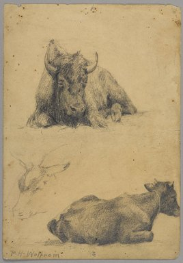 Philip H. Wolfrom (American, 1870-1904). Reclining Bull and Head of Goat (recto) and Reclining Bull (verso), n.d. Graphite on paper, Sheet: 9 15/16 x 6 15/16 in. (25.2 x 17.6 cm). Brooklyn Museum, Gift of Anna Wolfrom Dove, 27.832