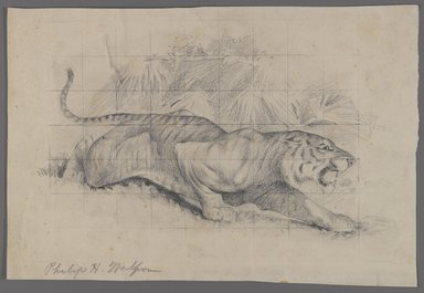 Philip H. Wolfrom (American, 1870-1904). Tiger in Landscape, n.d. Graphite on paper, Sheet: 8 1/8 x 12 in. (20.6 x 30.5 cm). Brooklyn Museum, Gift of Anna Wolfrom Dove, 27.834