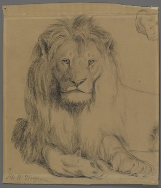 Philip H. Wolfrom (American, 1870-1904). Lion, n.d. Graphite on paper, Sheet: 9 3/4 x 8 1/2 in. (24.8 x 21.6 cm). Brooklyn Museum, Gift of Anna Wolfrom Dove, 27.835