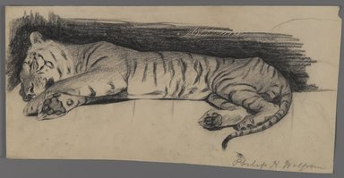 Philip H. Wolfrom (American, 1870-1904). Sleeping Tiger, n.d. Charcoal on paper, Sheet: 6 3/8 x 12 7/16 in. (16.2 x 31.6 cm). Brooklyn Museum, Gift of Anna Wolfrom Dove, 27.836