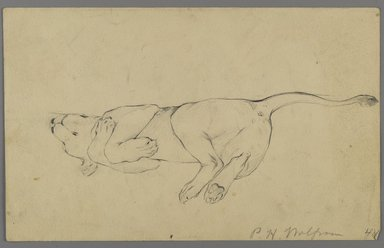 Philip H. Wolfrom (American, 1870-1904). Sleeping Lioness, n.d. Graphite on paper, Sheet: 5 5/8 x 9 1/16 in. (14.3 x 23 cm). Brooklyn Museum, Gift of Anna Wolfrom Dove, 27.838