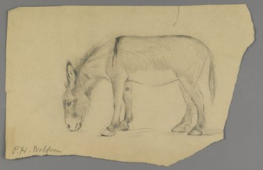 Philip H. Wolfrom (American, 1870-1904). Donkey, n.d. Graphite on paper, Sheet (irregular): 6 1/4 x 9 11/16 in. (15.9 x 24.6 cm). Brooklyn Museum, Gift of Anna Wolfrom Dove, 27.839