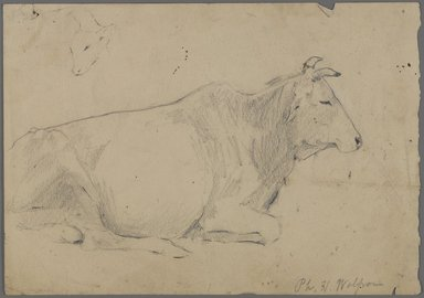Philip H. Wolfrom (American, 1870-1904). Seated Bull, n.d. Graphite on paper, Sheet: 6 15/16 x 9 15/16 in. (17.6 x 25.2 cm). Brooklyn Museum, Gift of Anna Wolfrom Dove, 27.840