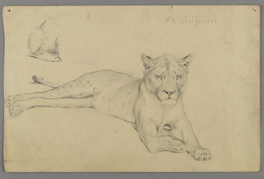 Philip H. Wolfrom (American, 1870-1904). Seated Lioness, n.d. Graphite on paper, Sheet: 6 x 9 1/4 in. (15.2 x 23.5 cm). Brooklyn Museum, Gift of Anna Wolfrom Dove, 27.841