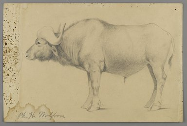 Philip H. Wolfrom (American, 1870-1904). Water Buffalo, n.d. Graphite on paper, Sheet: 6 x 9 1/16 in. (15.2 x 23 cm). Brooklyn Museum, Gift of Anna Wolfrom Dove, 27.842