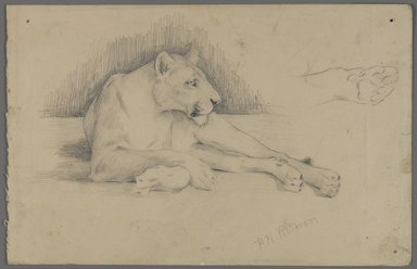 Philip H. Wolfrom (American, 1870-1904). Seated Lioness, n.d. Graphite on paper, Sheet: 6 x 9 5/16 in. (15.2 x 23.7 cm). Brooklyn Museum, Gift of Anna Wolfrom Dove, 27.843