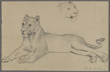 Philip H. Wolfrom (American, 1870-1904). Seated Lioness, n.d. Graphite and ink on paper, Sheet: 6 x 9 5/16 in. (15.2 x 23.7 cm). Brooklyn Museum, Gift of Anna Wolfrom Dove, 27.844