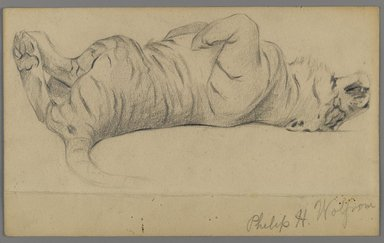 Philip H. Wolfrom (American, 1870-1904). Sleeping Tiger, n.d. Graphite on paper, Sheet: 5 1/2 x 8 15/16 in. (14 x 22.7 cm). Brooklyn Museum, Gift of Anna Wolfrom Dove, 27.845