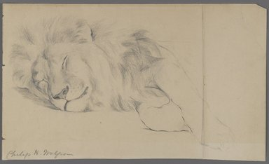 Philip H. Wolfrom (American, 1870-1904). Sleeping Lion, n.d. Graphite on paper, Sheet: 7 1/16 x 11 15/16 in. (17.9 x 30.3 cm). Brooklyn Museum, Gift of Anna Wolfrom Dove, 27.847