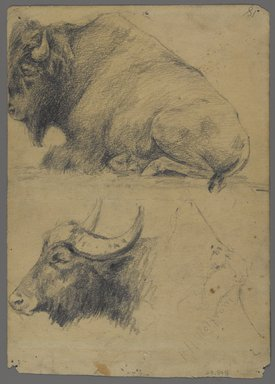 Philip H. Wolfrom (American, 1870-1904). Brahman bulls (recto) and Bison and Head of Water Buffalo (verso), n.d. Graphite on paper, Sheet: 9 13/16 x 7 in. (24.9 x 17.8 cm). Brooklyn Museum, Gift of Anna Wolfrom Dove, 27.848