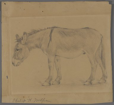 Philip H. Wolfrom (American, 1870-1904). Donkey, n.d. Graphite on paper, Sheet: 9 3/16 x 9 3/4 in. (23.3 x 24.8 cm). Brooklyn Museum, Gift of Anna Wolfrom Dove, 27.851